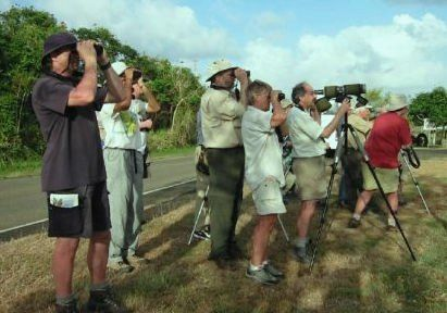 hire a bird guide in panama. Birding groups at Panama hotspots.
